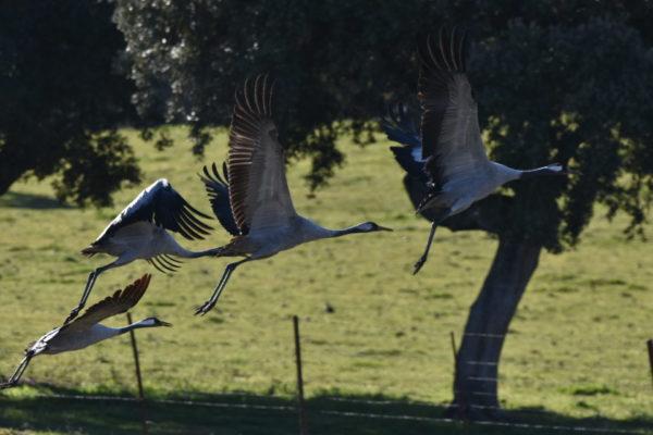 Avistamiento de aves en Extremadura, España