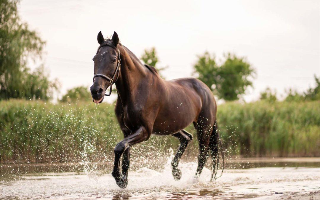 Las mejores rutas a caballo por España