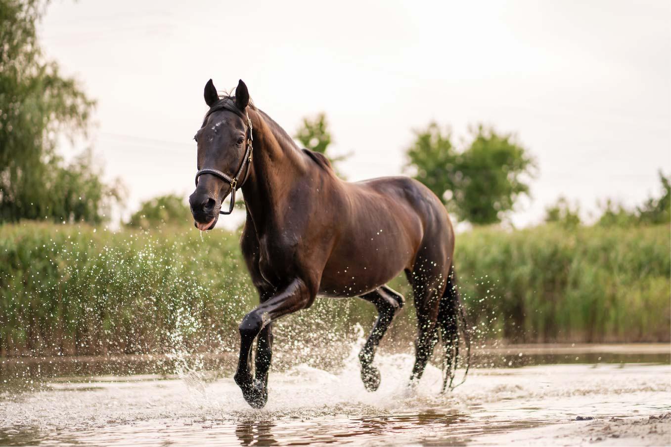Rutas a caballo por España Hommter