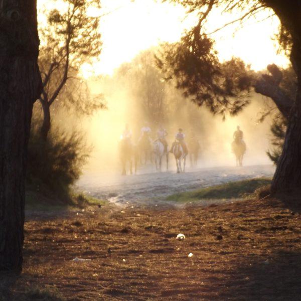 Ruta a caballo al atardecer en Doñana, Huelva, España