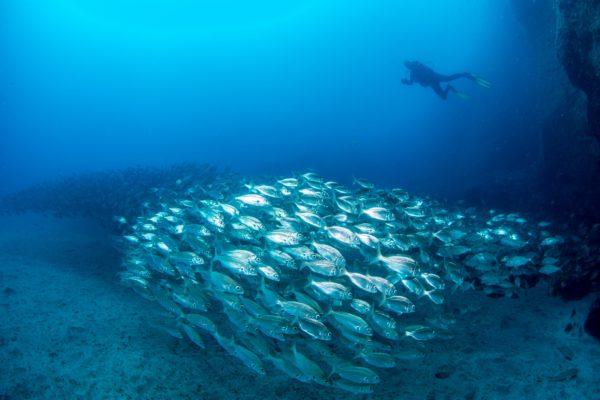 Pack doble inmersión con equipo en Gran Canaria, España