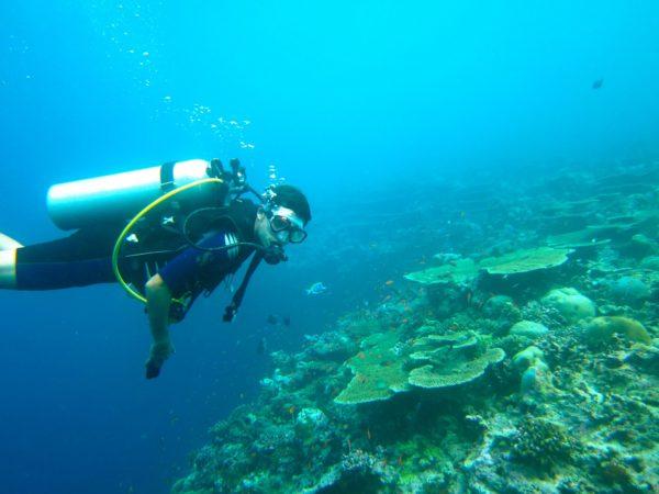 Buceo Discover Scuba dive en Marbella, España