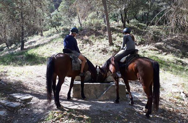 Ruta a caballo La Rosa de los Escribanos, Málaga, Sierra de las Nieves,España