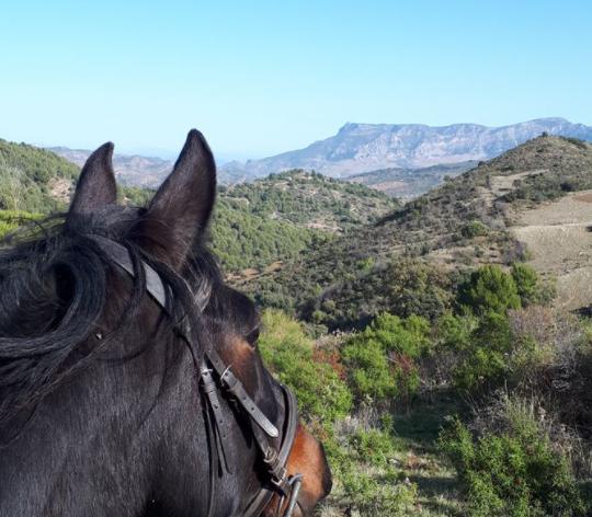 Ruta a caballo del Puerto de la Mujer en Málaga, Sierra de las Nieves, España