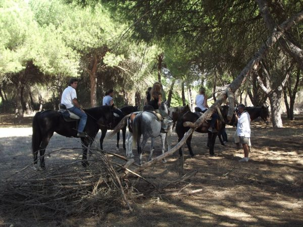 Ruta a caballo 3 horas 'Territorio Lince', Huelva, España