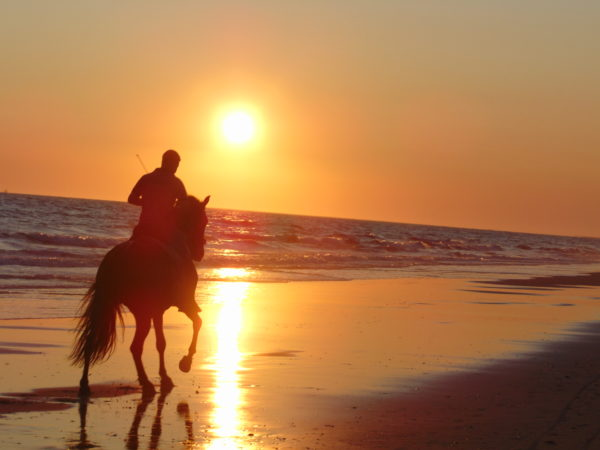 Ruta a caballo puesta de sol en Doñana, Huelva España