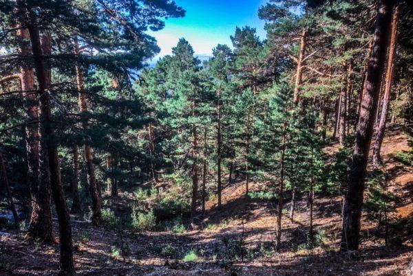 Senderismo/trekking en La Barranca Sierra de Guarrama, Madrid, España
