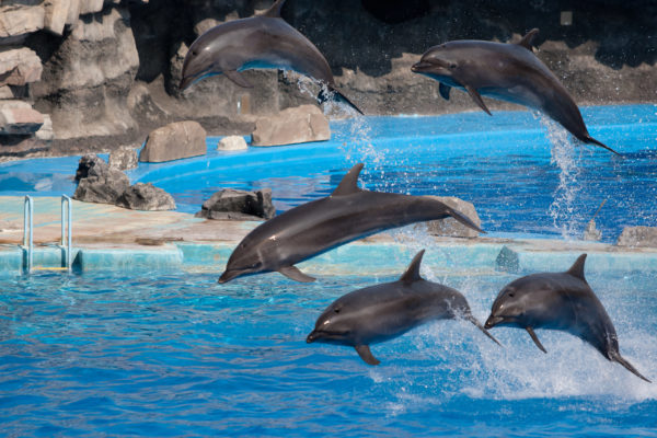 Show de delfines y Cocodrilo park, Marrakech, Marruecos