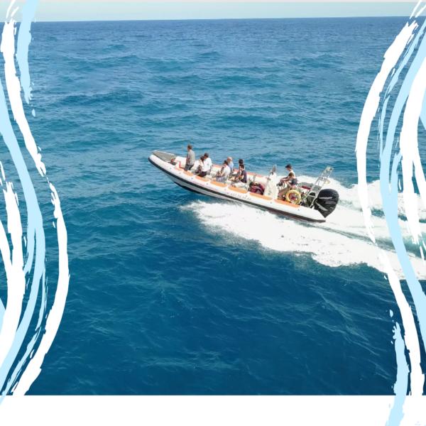 Speed Boat + Snorkeling en Isla de Tabarca, Alicante, España