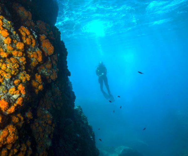 Buceo PADI Advanced Open Water Diver La Herradura, Granada, España
