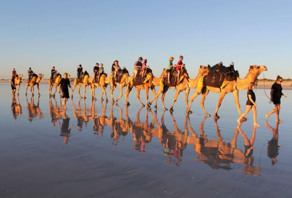 Excursión en camello por Essaouira, Marrakech, Marruecos