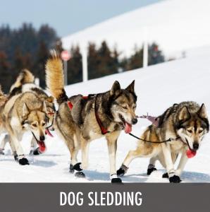 dos sledding