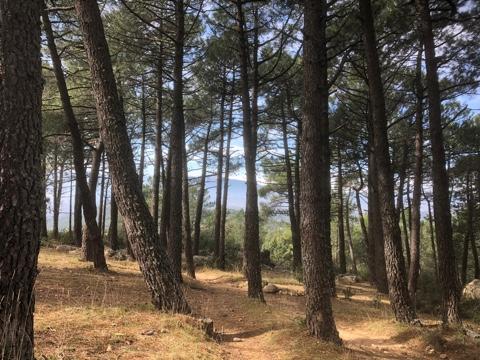 Despedida de soltera Naturaleza & Relax en Sierra de Guadarrama, Madrid, España