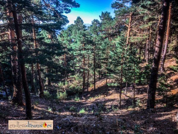 Ruta Senderismo en La Barranca, Madrid, España
